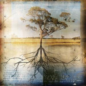 Graph of Tree and Roots by Colin Anderson
