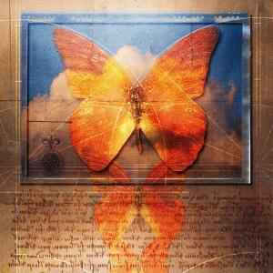 Overlaying Butterflies and Text by Colin Anderson