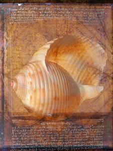 Seashell and Handwriting by Colin Anderson