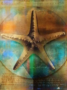 Starfish by Colin Anderson