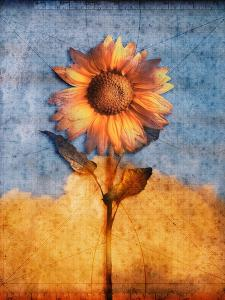 Sunflower and Sky by Colin Anderson