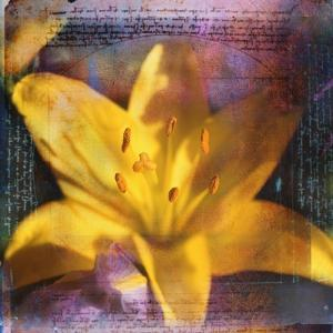 Yellow Lily and Text by Colin Anderson