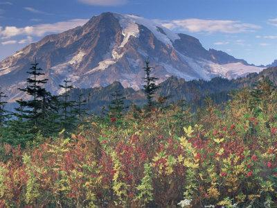 Landscape, Mount Rainier National Park, Washington State, United States of America, North America