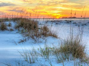 A Colorful Sunset over the Seaoats and Dunes on Fort Pickens Beach in the Gulf Islands National Sea by Colin D Young