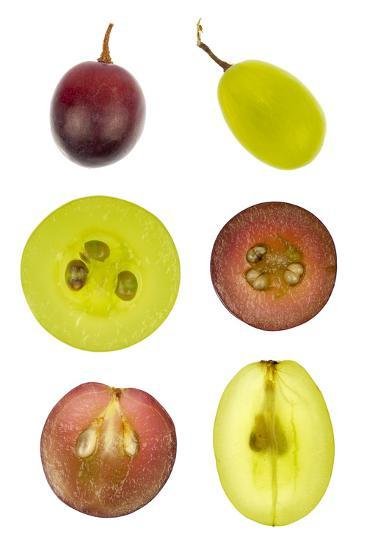 Collage of Sliced Red and Green Grapes-YellowPaul-Photographic Print