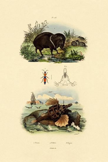 Collared Peccary, 1833-39--Giclee Print