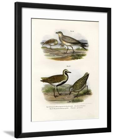 Collared Pratincole, 1864--Framed Giclee Print