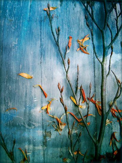 Collected Plants and Gerber Daisy Petals on a Wooden Sky Background-Alaya Gadeh-Photographic Print
