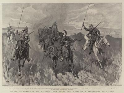 https://imgc.artprintimages.com/img/print/collecting-forage-in-south-africa-how-the-colonials-manage-a-refractory-mule-team_u-l-puolew0.jpg?p=0