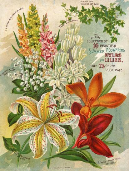 Collection of 10 Beautiful Summer Flowering Bulbs and Lillies--Premium Giclee Print