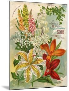 Collection of 10 Beautiful Summer Flowering Bulbs and Lillies