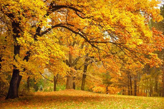 Collection of Beautiful Colorful Autumn Leaves / Green, Yellow, Orange, Red-Taiga-Photographic Print