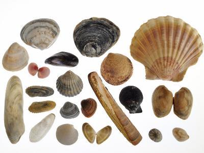 Collection of Shells from the North Sea-Philippe Clement-Photographic Print