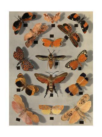 https://imgc.artprintimages.com/img/print/collection-of-various-little-moths_u-l-pojxq60.jpg?p=0