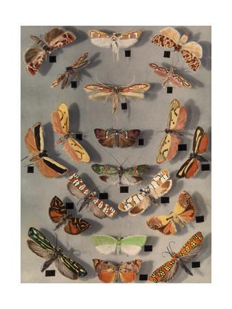 https://imgc.artprintimages.com/img/print/collection-of-various-little-moths_u-l-pojxqy0.jpg?p=0