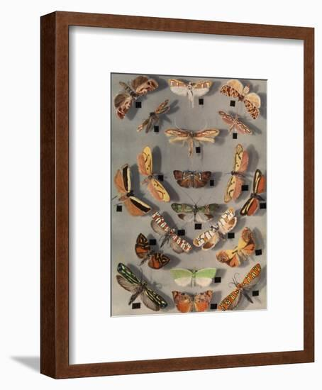Collection of Various Little Moths-Edwin L. Wisherd-Framed Photographic Print