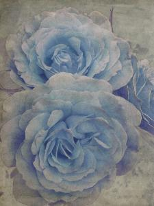 Faded Roses by Collezione Botanica