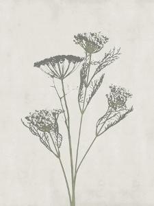 Floral Wild - Dill by Collezione Botanica