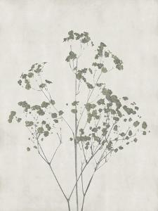 Floral Wild - Gypsophila by Collezione Botanica