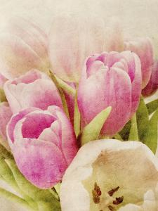 Vintage Tulip I by Collezione Botanica