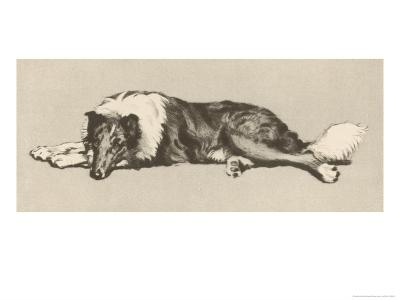 Collie Dog Relaxes-Cecil Aldin-Giclee Print