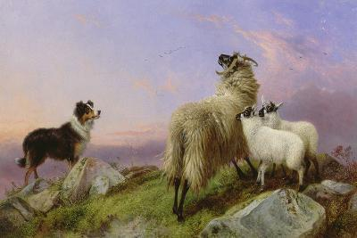 Collie, Ewe and Lambs-Richard Ansdell-Giclee Print