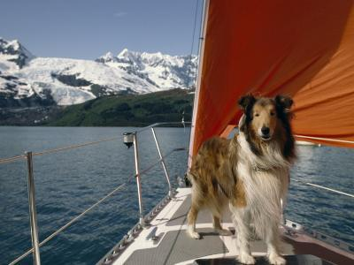 Collie Stands on the Bow of a Sailboat Near Snowy Mountains-Michael Melford-Photographic Print