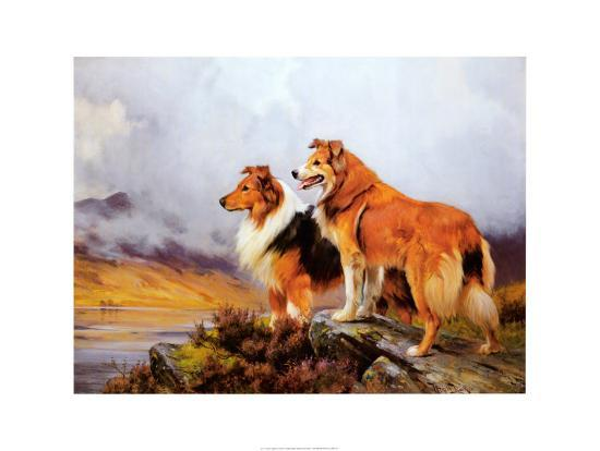 Collies in a Highland Landscape-Wright Barker-Art Print