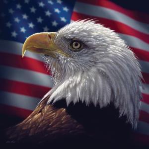 American Bald Eagle by Collin Bogle