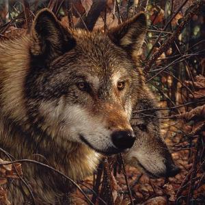 Autumn Wolves by Collin Bogle