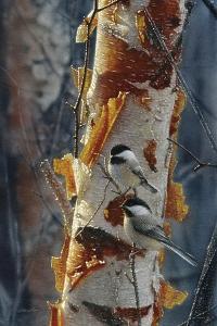 Black-Capped Chickadees - Sunlit Birch II by Collin Bogle