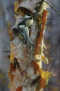 Black-Capped Chickadees - Sunlit Birch by Collin Bogle