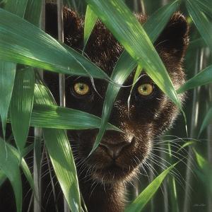 Black Panther - Wild Eyes by Collin Bogle
