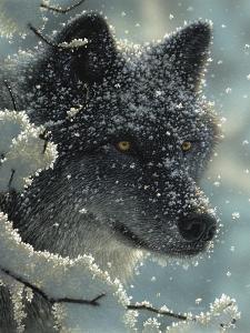 Black Wolf - Black in White by Collin Bogle