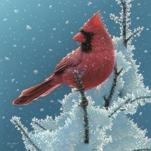 Cardinal - Cherry on Top by Collin Bogle