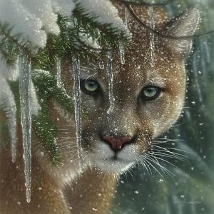 Cougar - Frozen by Collin Bogle
