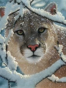 Cougar - Silent Encounter by Collin Bogle