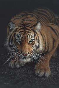 Crouching Tiger - Vertical by Collin Bogle