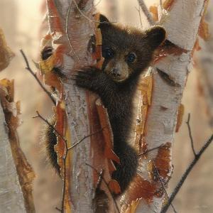 Curious Cub II by Collin Bogle