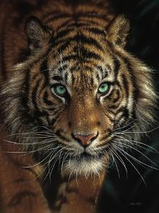 Eye of the Tiger by Collin Bogle