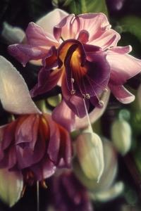 Fuchsia by Collin Bogle
