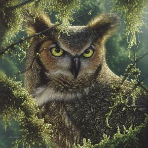 Great Horned Owl - Watching and Waiting by Collin Bogle