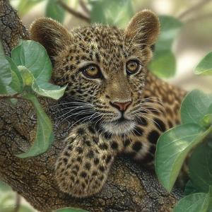 Leopard Cub - Tree Hugger by Collin Bogle