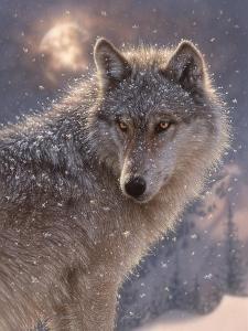 Lone Wolf by Collin Bogle