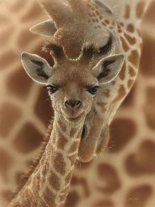 Newborn Giraffe by Collin Bogle