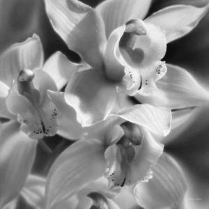 Orchids - B&W by Collin Bogle