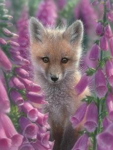 Red Fox - Foxgloves by Collin Bogle