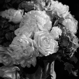 Rhapsody in Bloom - B&W by Collin Bogle