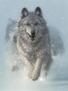Running Wolves - Snow Plow by Collin Bogle