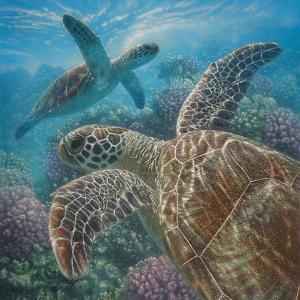 Sea Turtles - Turtle Bay - Square by Collin Bogle